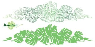 Vector set with outline tropical Monstera or Swiss cheese plant leaf bunch in pastel green isolated on white background. Monstera horizontal vine in contour royalty free illustration