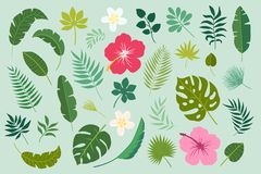Vector set with palm leaves and flowers Stock Photos