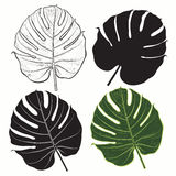 Vector set of  palm leaves  on white background. Stock Images