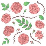 Vector set of pink rose flowers with buds, leaves and thorny stems line art isolated on the white background. Hand drawn floral co Royalty Free Stock Photography