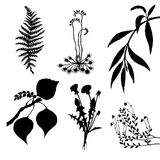 Vector set of the plants Royalty Free Stock Photo