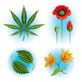 Vector set of plants Royalty Free Stock Photography