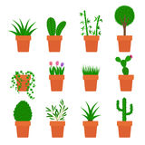 Vector set of plants in pots Stock Photography