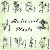 Vector set of 10 plants - yarrow, echinacea, tansy, calendula, thyme, mint, chamomile, plantain, fireweeed, dandelion. Vector set of 10 drawings of plants Stock Photography