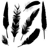 Vector Set of Plumage Silhouettes. On White Background Royalty Free Stock Photography