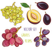 Vector set with plums and grapes Royalty Free Stock Image