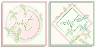 Vector set of postcards templates, invitation with hand-drawn graphics sprigs of beautiful mint, Gently color shades of green, stock photo