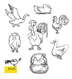 Vector set of poultry yard sketches. Vector hand drawn set of domestic birds. Poultry yard illustration with cock, chicken in a bucket and goose Stock Image