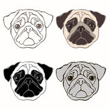 Vector set of  pug's face. Hand-drawn  illustration. Sketc Stock Photography