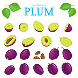 Vector set of purple fruits. Plum fruit, whole, peeled, piece  half, slice leaves, seed. Collection  delicious red plums Stock Photography