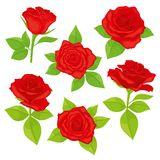 Vector set of realistic, detailed, isolated Rose buds in red color with green leaves on white background. Royalty Free Stock Images