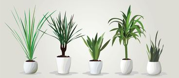 Vector set of realistic green houseplants in pots vector illustration