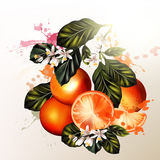 Vector set of realistic  oranges with flowers for design Stock Photography