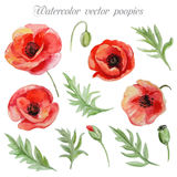 Vector set of red watercolor poppy flowers. Royalty Free Stock Photos