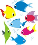 Vector set of reef fish. Set Design - isolated vector illustration of reef tropical fish Stock Photography