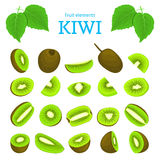 Vector set of ripe tropical kiwi fruits. Kiwifruit peeled, piece  half slice seed. Collection  delicious green  designer. Vector set of ripe tropical kiwi fruits Royalty Free Stock Images