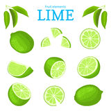 Vector set of ripe tropical limes fruits. Lime fruit peeled, piece of half slice. Collection of delicious green lemon Royalty Free Stock Image