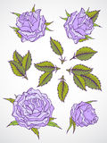 Vector set of roses and leaves. Royalty Free Stock Photo