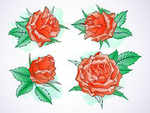 Vector set of roses and leaves with watercolor elements. Stock Photo