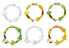 Vector set of round, outline wreaths, compositions of different autumn and summer tree leaves. Rowan berry bunches, acorns, chestnuts and pine cones, isolated Stock Images