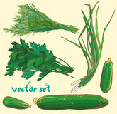 Vector set with scallions, dill, parsley, cucumbers Royalty Free Stock Photography
