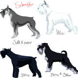 Vector Set of Schnauzer  Stock Photos