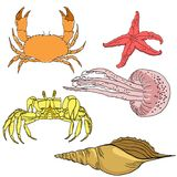 Vector set of sea fauna. Royalty Free Stock Image