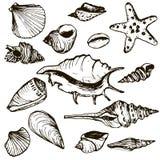 Vector set of shells Stock Photos