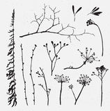 Vector set of silhouettes of flowers and grass on  background. Stock Image