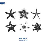 Vector set with six starfish. Starfish isolated on white, set of different species of starfish, vector illustration Stock Images