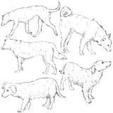 Vector Set of Sketch Dogs Stock Photography