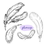 Vector set of sketch plumage Royalty Free Stock Photos