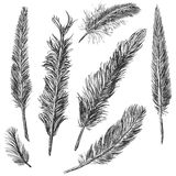 Vector Set of Sketch Plumage. On White Background Stock Photography