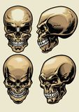 Set of skull in detailed style Royalty Free Stock Images