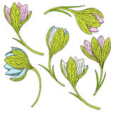 Vector set of snowdrops Stock Images