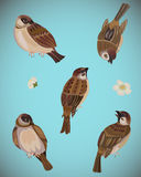 Vector set of sparrows Stock Photo