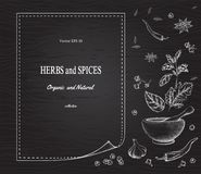 Spices and herbs on the background black Board royalty free illustration