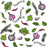Vector Set of Spices and Vegetables. Red Onion, Garlic Clove, Parsley, Thyme, Rosemary, Hot Chile, Mint Royalty Free Stock Photos
