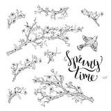 Vector set of spring branches isolated on white background. Royalty Free Stock Images