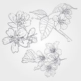 Vector set of spring branches isolated on white background. Blossoms, leaves, branches Stock Images