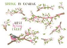 Vector set of spring branches on white background. stock illustration