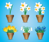 Vector set. Spring flowers. Royalty Free Stock Photo