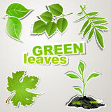 Vector set sticker: green leaves Royalty Free Stock Photos