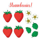 Vector set with strawberries, flowers and leaves isolated on white background. Royalty Free Stock Images