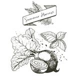 Vector set of summer harvest. Decorated with banner, fern leaves and blots. Beetroot and basil. Royalty Free Stock Photo