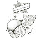 Vector set of summer harvest. Decorated with banner, fern leaves and blots. Lemon, lime oan orange slices. Royalty Free Stock Photo