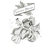 Vector set of summer harvest. Decorated with banner, fern leaves and blots. Strawberry and rasbberry. Stock Images