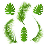 Vector set of summer plant decoration. Green palm tree. Tropic nature Stock Photography