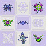 Vector set of a thistle flowers and Celtic knots. Vector stylized set of a thistle flowers and Celtic knots Stock Photography