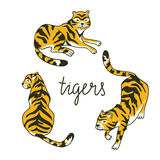 Vector set of tigers in the diffrent poses. Tropic animal collection isolated on the white background. Stock Photography